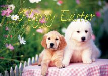 Holiday Cards: Easter Puppies